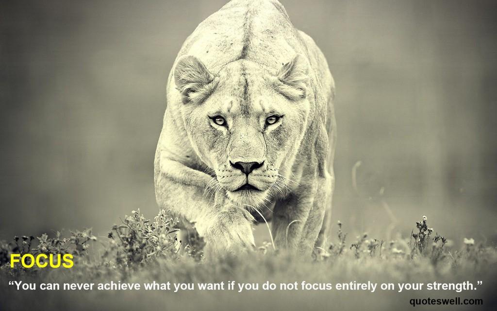 lion-focus1